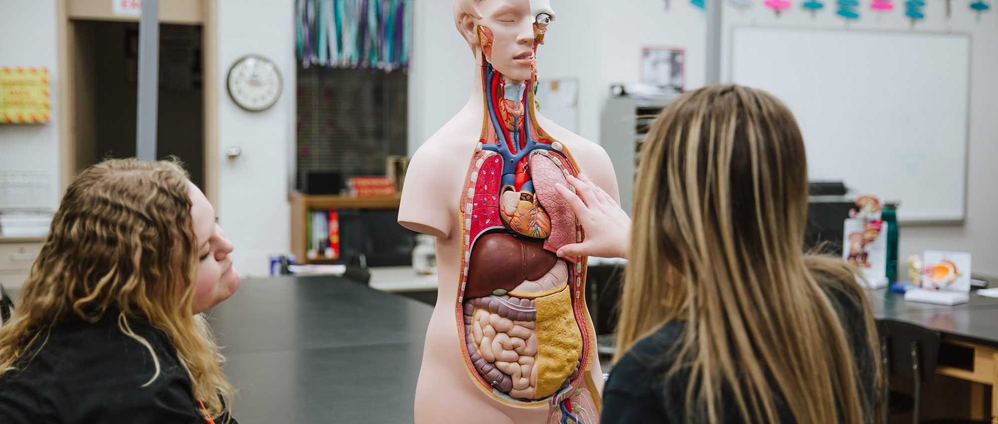 student studying the anatomy